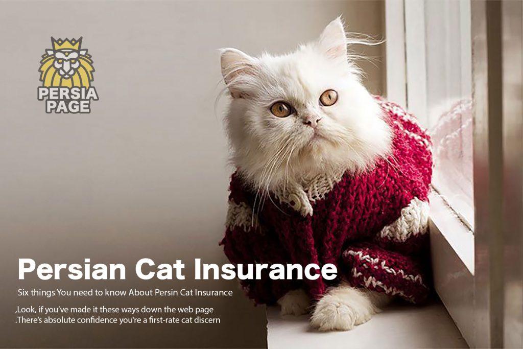 Persian Cat insurance